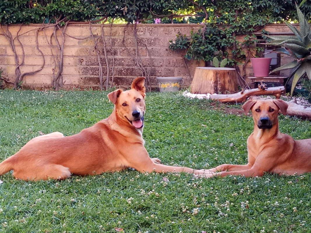 Cibi vietati ai cani cosa non dare al cane nella cucina casalinga per cani - Cucina casalinga per cani dosi ...